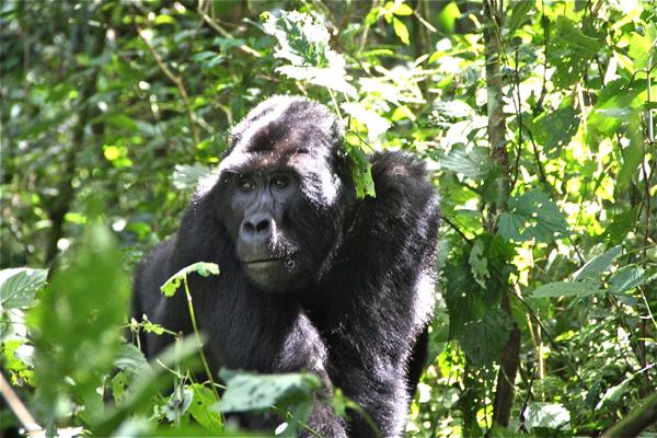 uganda6